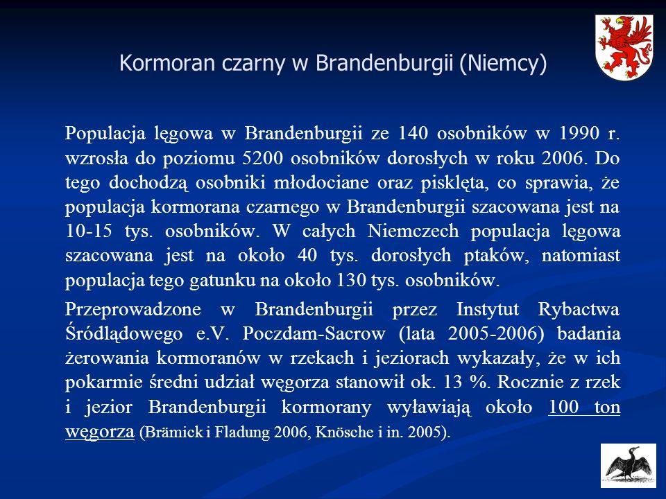 Populacja lęgowa w Brandenburgii ze 140 osobników w 1990 r. wzrosła do poziomu 5200 osobników dorosłych w roku 2006. Do tego dochodzą osobniki młodoci