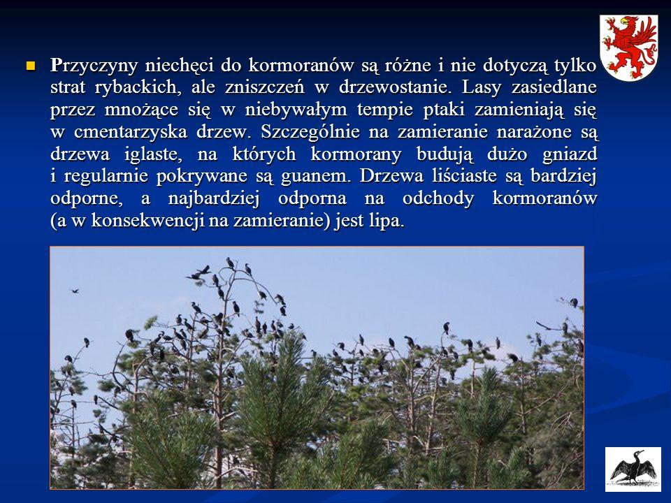 Przyczyny niechęci do kormoranów są różne i nie dotyczą tylko strat rybackich, ale zniszczeń w drzewostanie. Lasy zasiedlane przez mnożące się w nieby