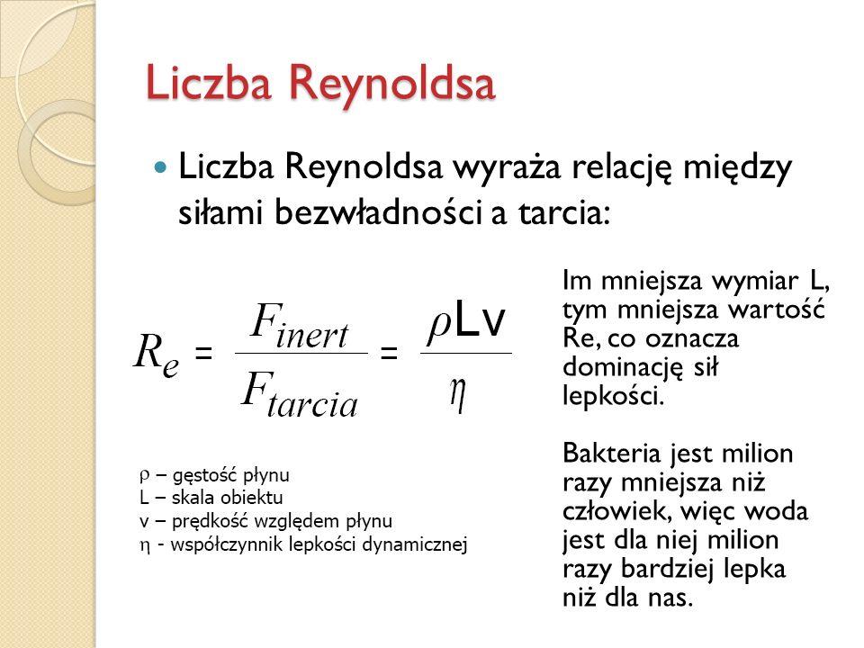 Liczba Reynoldsa Liczba Reynoldsa wyraża relację między siłami bezwładności a tarcia: Im mniejsza wymiar L, tym mniejsza wartość Re, co oznacza domina