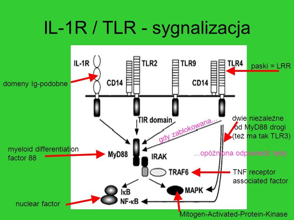IL-1R / TLR - sygnalizacja domeny Ig-podobne dwie niezależne od MyD88 drogi (też ma tak TLR3) TNF receptor associated factor paski = LRR nuclear facto