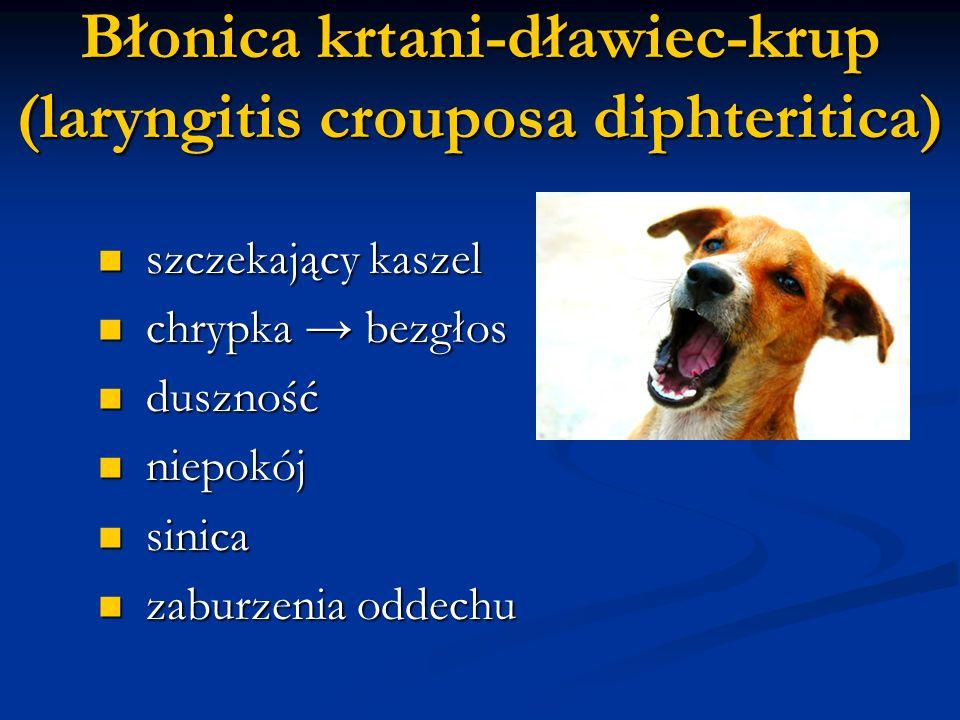 Błonica krtani-dławiec-krup (laryngitis crouposa diphteritica) szczekający kaszel szczekający kaszel chrypka bezgłos chrypka bezgłos duszność duszność