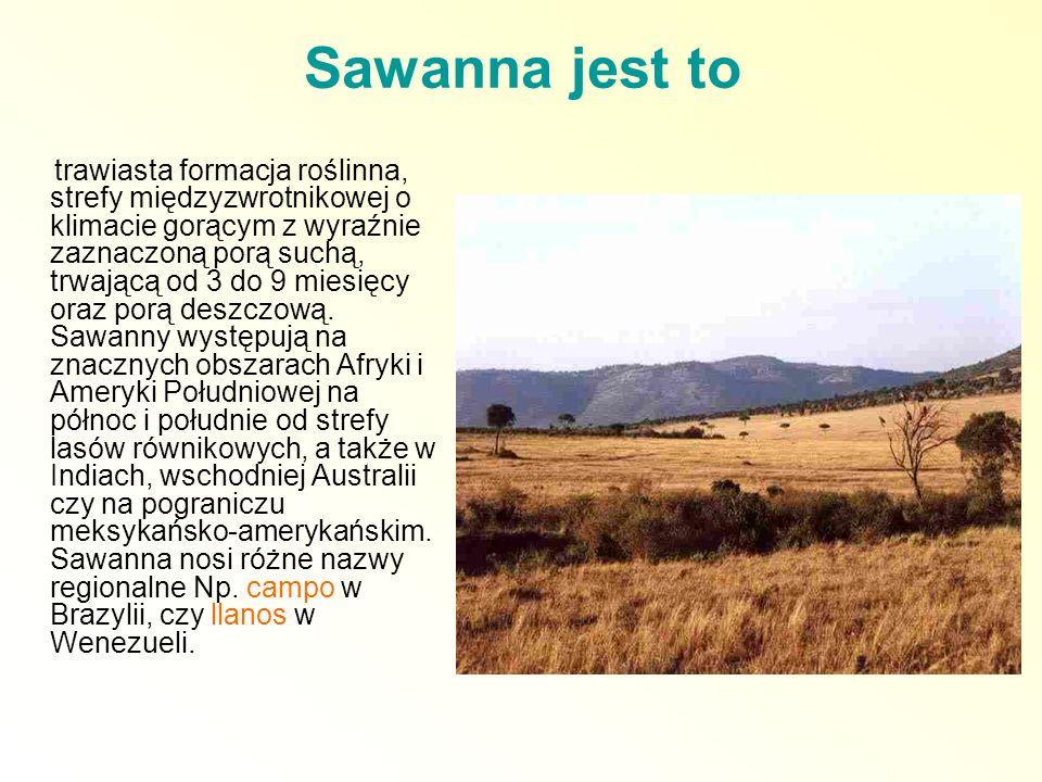 Sawanna jest to trawiasta formacja roślinna, strefy międzyzwrotnikowej o klimacie gorącym z wyraźnie zaznaczoną porą suchą, trwającą od 3 do 9 miesięc