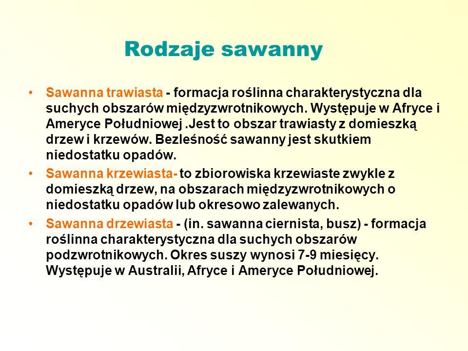 Rodzaje sawanny Sawanna trawiasta - formacja roślinna charakterystyczna dla suchych obszarów międzyzwrotnikowych. Występuje w Afryce i Ameryce Południ