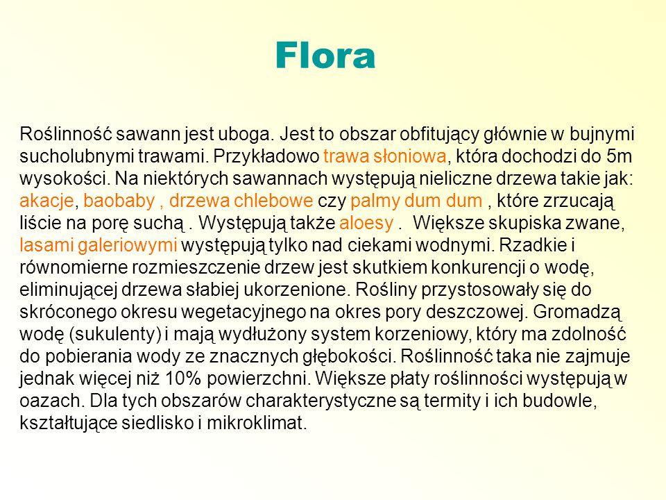 Flora Roślinność sawann jest uboga. Jest to obszar obfitujący głównie w bujnymi sucholubnymi trawami. Przykładowo trawa słoniowa, która dochodzi do 5m