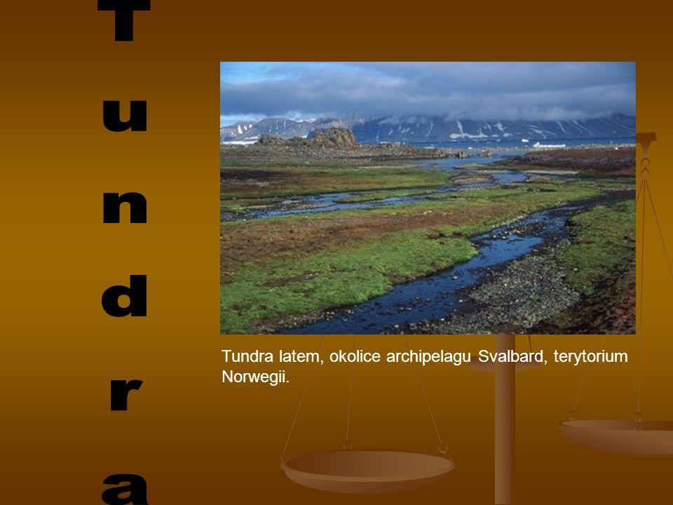 Tundra latem, okolice archipelagu Svalbard, terytorium Norwegii.