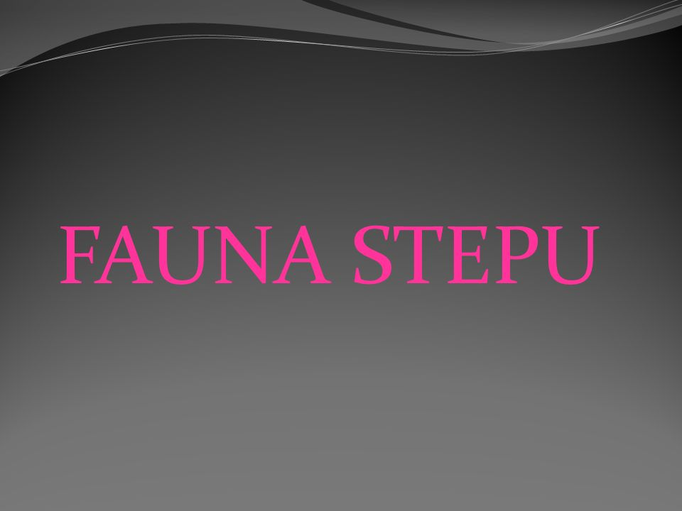 FAUNA STEPU