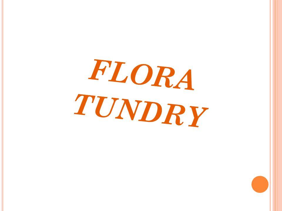 FLORA TUNDRY