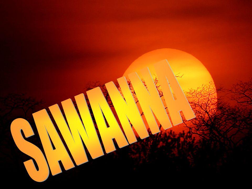 Sawanna - (z dialektów karaibskich zawan) – trawiasta formacja roślinna, strefy międzyzwrotnikowej o klimacie gorącym z wyraźnie zaznaczoną porą suchą, trwającą od 3 do 9 miesięcy oraz porą deszczową.