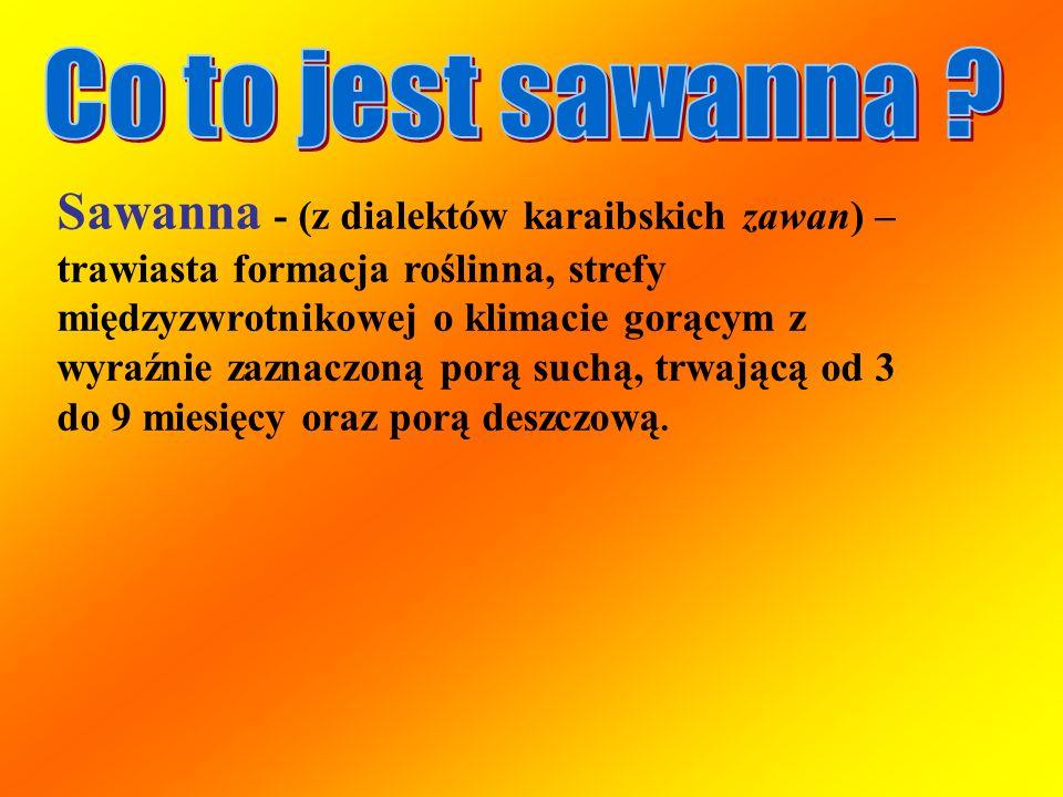 Sawanna - (z dialektów karaibskich zawan) – trawiasta formacja roślinna, strefy międzyzwrotnikowej o klimacie gorącym z wyraźnie zaznaczoną porą suchą
