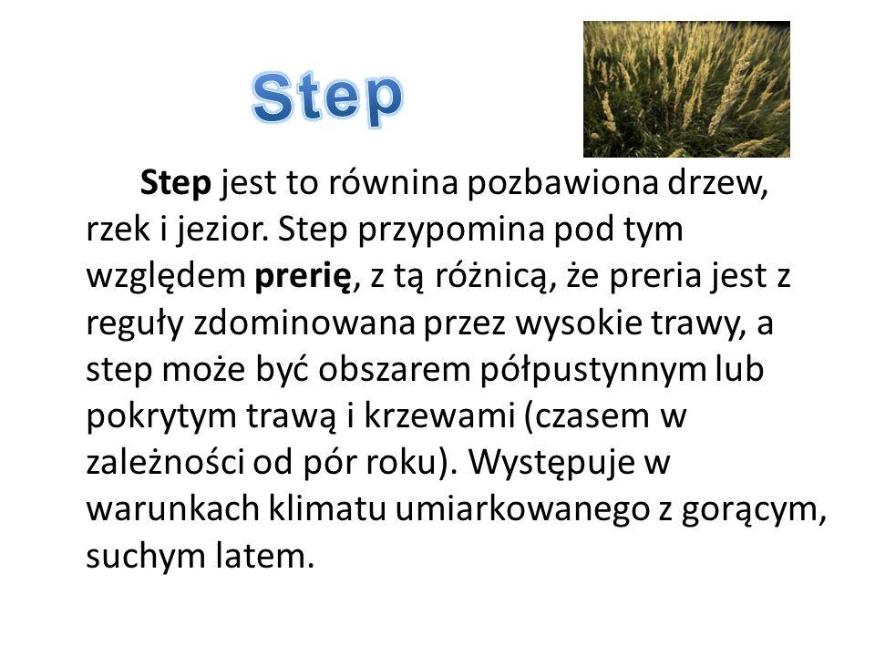 Step jest to równina pozbawiona drzew, rzek i jezior. Step przypomina pod tym względem prerię, z tą różnicą, że preria jest z reguły zdominowana przez