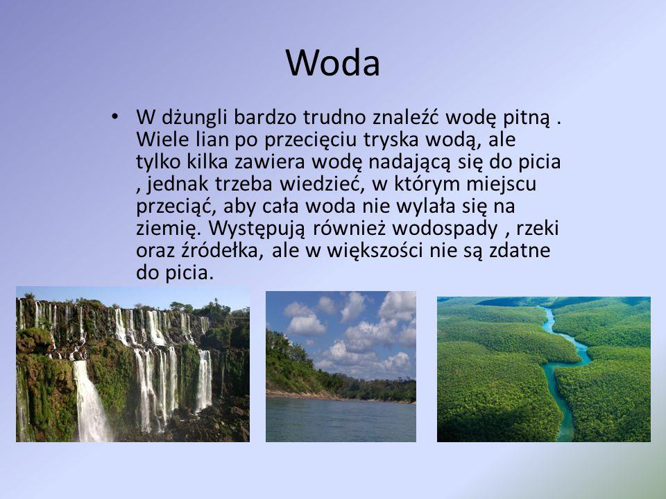 Woda W dżungli bardzo trudno znaleźć wodę pitną. Wiele lian po przecięciu tryska wodą, ale tylko kilka zawiera wodę nadającą się do picia, jednak trze