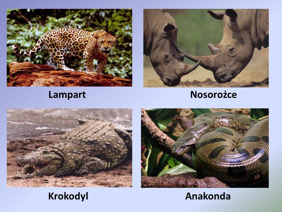 Krokodyl LampartNosorożce Anakonda