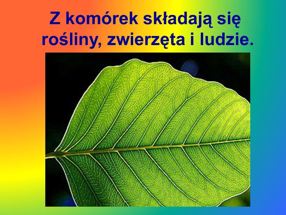 Pomnik Marii Skłodowskiej-Curie w parku przy ul.Wawelskiej w Warszawie To będzie sobota.