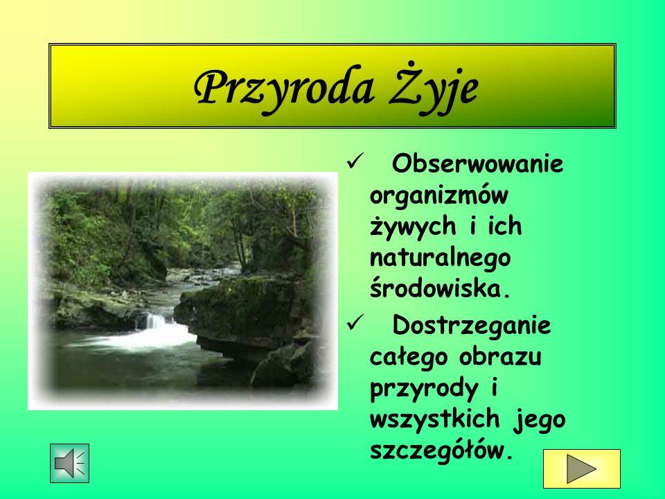 Przyroda Ż yje Obserwowanie organizmów żywych i ich naturalnego środowiska.