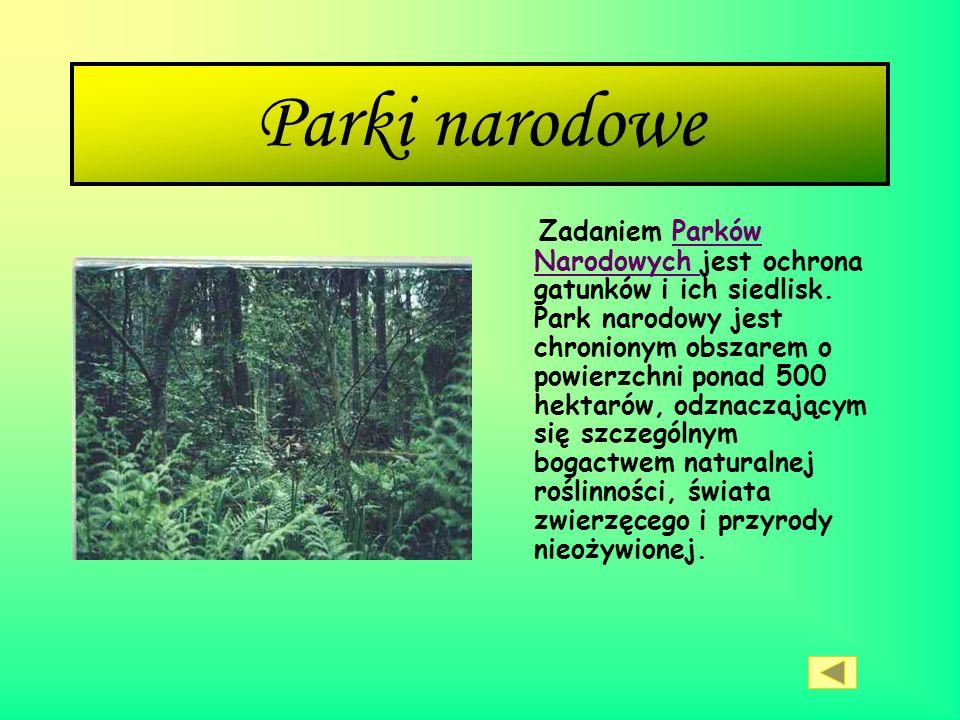 Definicja parku narodowego Park narodowy w Polsce obejmuje obszar chroniony o szczególnie wysokich wartościach przyrodniczych, cennych również z punkt