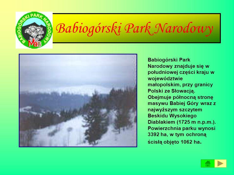 Opisy parków narodowych NrNazwa parkuRok założenia Powierzchni a (ha) Siedziba zarządu Uwagi 1Babiogórski19543392ZawojaOd 1976 Światowy Rezerwat Biosf