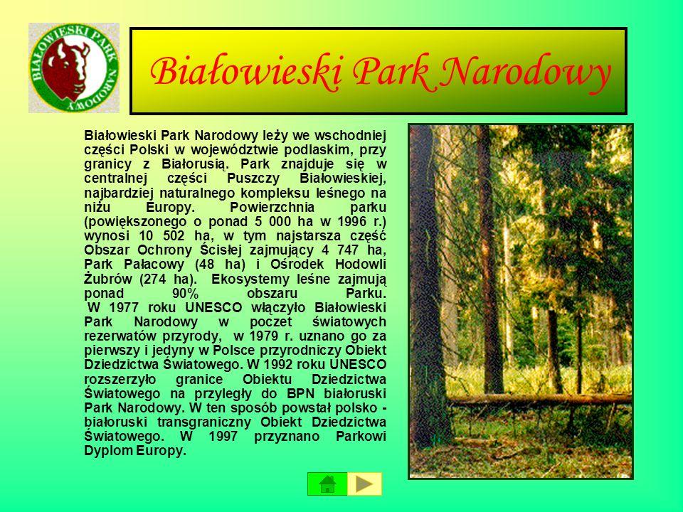 Babiogórski Park Narodowy Babiogórski Park Narodowy znajduje się w południowej części kraju w województwie małopolskim, przy granicy Polski ze Słowacj