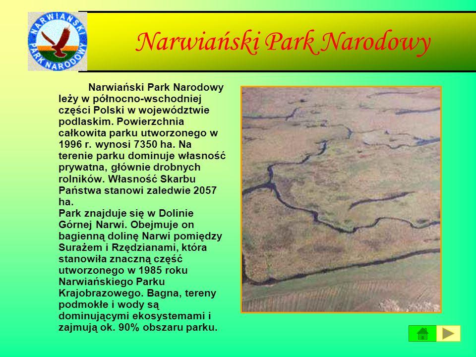 Magurski Park Narodowy Magurski Park Narodowy utworzony został w 1995 roku na obszarze 19962 ha a obecnie zajmuje powierzchnię 19439 ha. Park leży w p