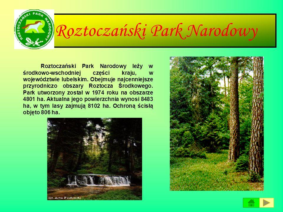 Poleski Park Narodowy Poleski Park Narodowy leży w Polsce środkowo-wschodniej na terenie województwa lubelskiego. Utworzony został w 1990 r. na obszar