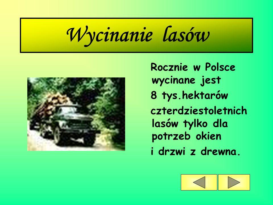 Wycinanie lasów Rocznie w Polsce wycinane jest 8 tys.hektarów czterdziestoletnich lasów tylko dla potrzeb okien i drzwi z drewna.