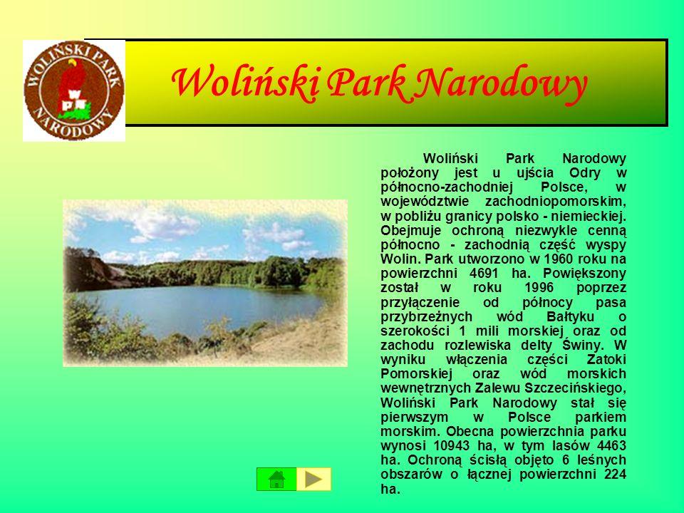 Wigierski Park Narodowy Wigierski Park Narodowy znajduje się w północno-wschodniej Polsce, na terenie województwa podlaskiego, w krainie Mazursko- Pod