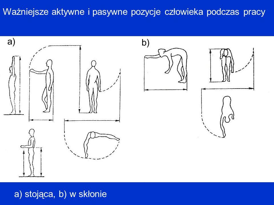 Ważniejsze aktywne i pasywne pozycje człowieka podczas pracy a) b) a) stojąca, b) w skłonie