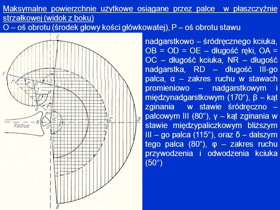 Maksymalne powierzchnie użytkowe osiągane przez palce w płaszczyźnie strzałkowej (widok z boku) O – oś obrotu (środek głowy kości główkowatej), P – oś