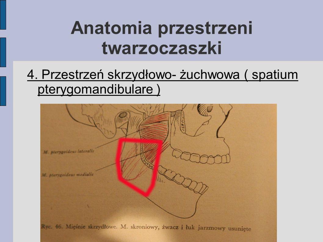 Anatomia przestrzeni twarzoczaszki 4. Przestrzeń skrzydłowo- żuchwowa ( spatium pterygomandibulare )