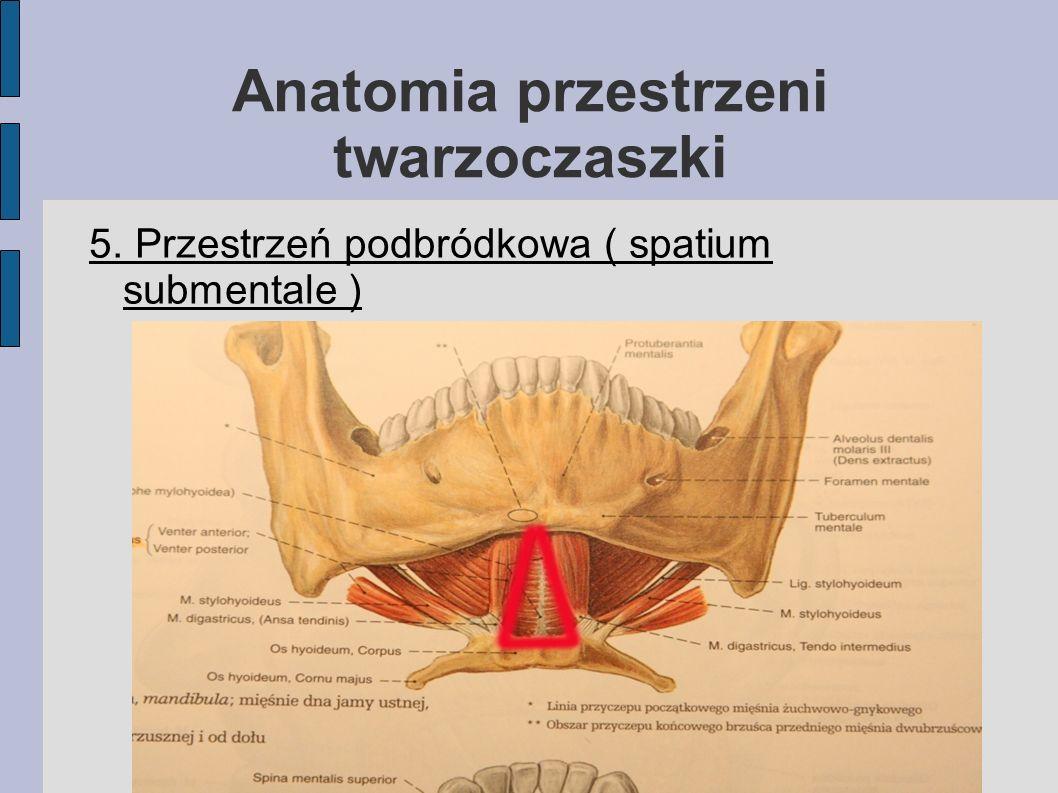 Anatomia przestrzeni twarzoczaszki 5. Przestrzeń podbródkowa ( spatium submentale )