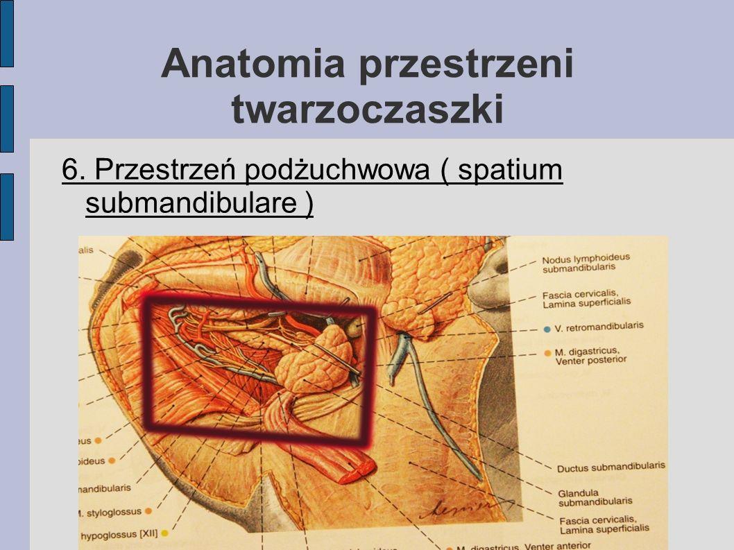 Anatomia przestrzeni twarzoczaszki 6. Przestrzeń podżuchwowa ( spatium submandibulare )