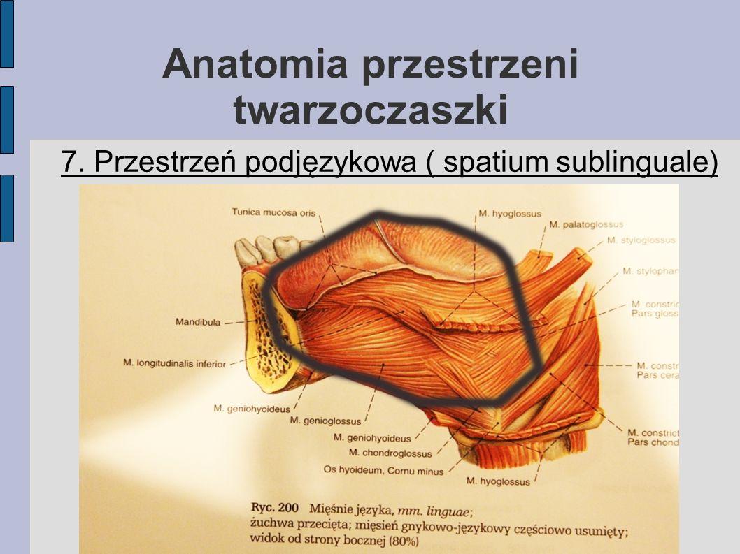 Anatomia przestrzeni twarzoczaszki 7. Przestrzeń podjęzykowa ( spatium sublinguale)