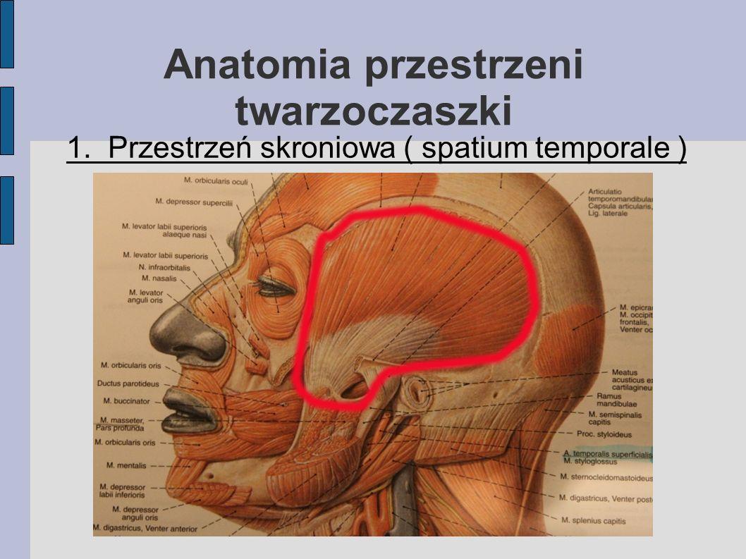 Ograniczenia: Od góry - Dolny brzeg trzonu żuchwy oraz obydwa brzuścce m.