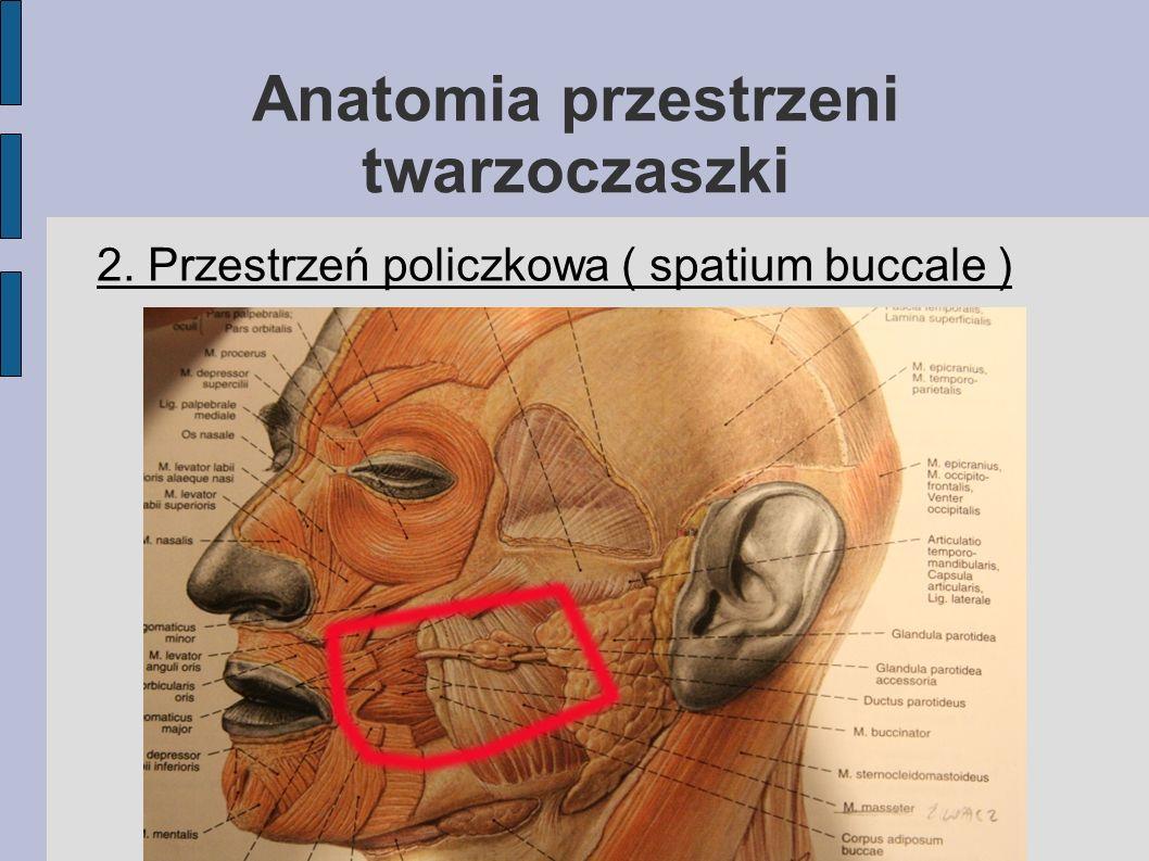 Anatomia przestrzeni twarzoczaszki 2. Przestrzeń policzkowa ( spatium buccale )