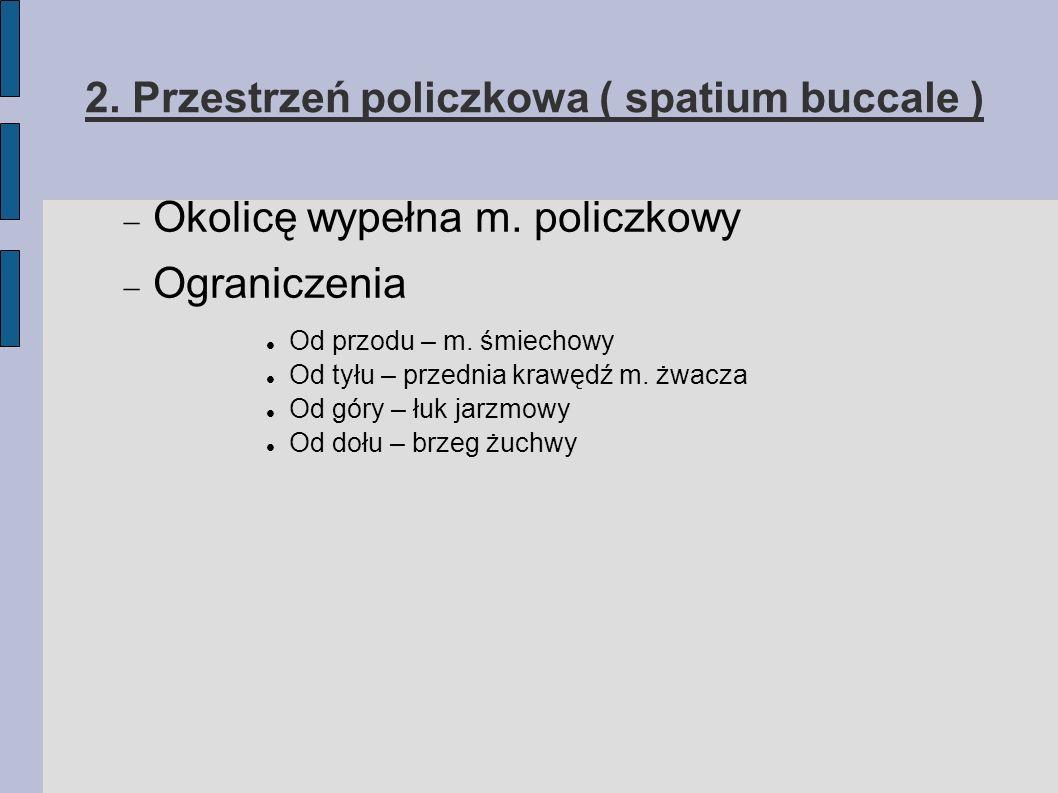Anatomia przestrzeni twarzoczaszki 8. Przestrzeń przygardłowa ( spatium parapharyngeum )
