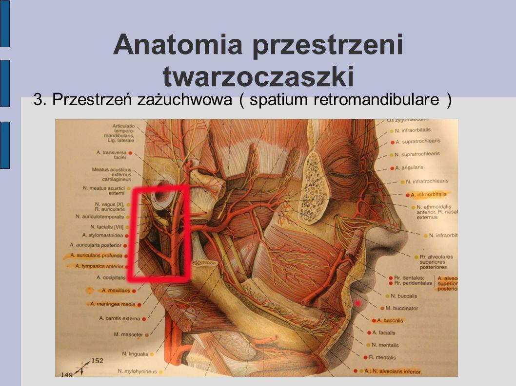 Anatomia przestrzeni twarzoczaszki 3. Przestrzeń zażuchwowa ( spatium retromandibulare )