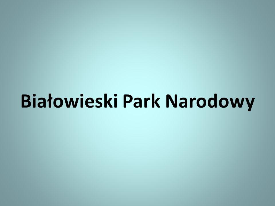 Szczególne miejsce w roślinności Parku Białowieskiego pełnią grzyby.