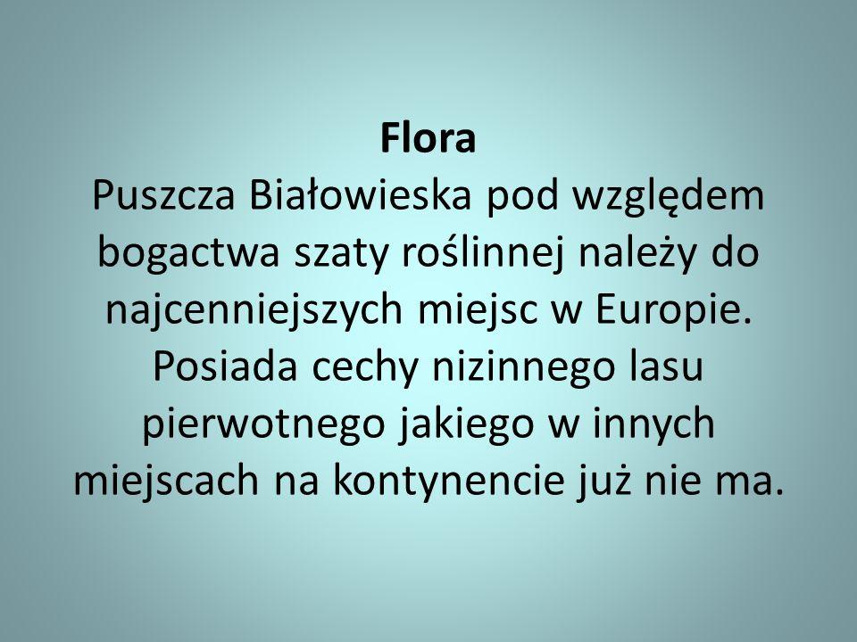Flora Puszcza Białowieska pod względem bogactwa szaty roślinnej należy do najcenniejszych miejsc w Europie. Posiada cechy nizinnego lasu pierwotnego j