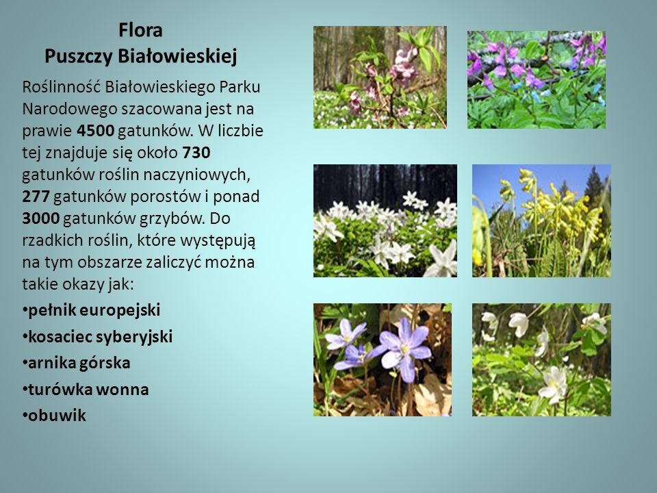 Flora Puszczy Białowieskiej Roślinność Białowieskiego Parku Narodowego szacowana jest na prawie 4500 gatunków. W liczbie tej znajduje się około 730 ga
