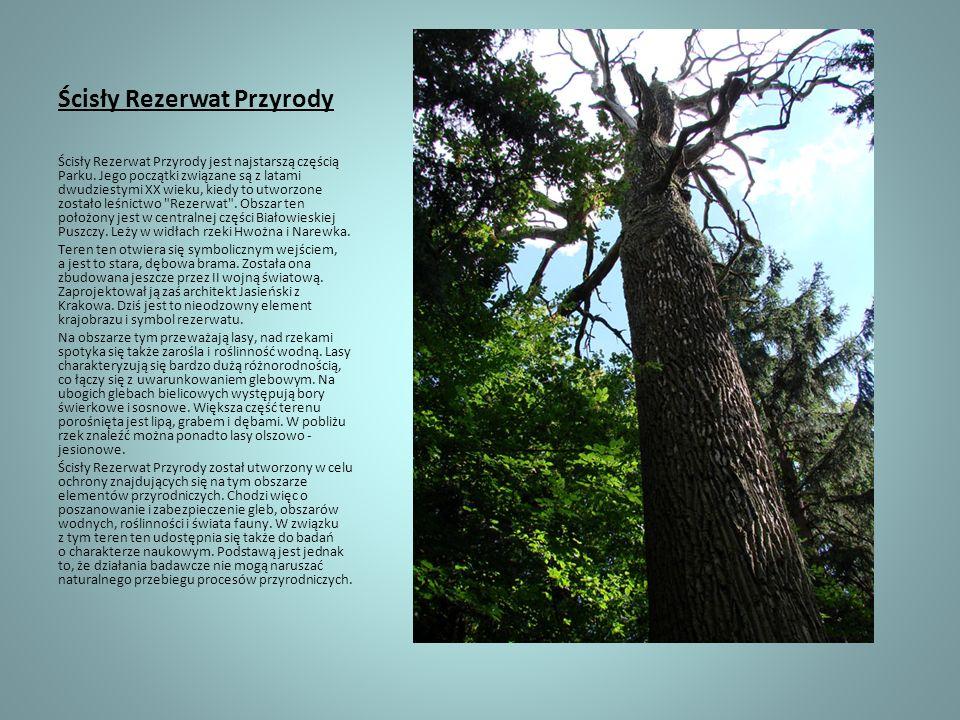 Ścisły Rezerwat Przyrody Ścisły Rezerwat Przyrody jest najstarszą częścią Parku. Jego początki związane są z latami dwudziestymi XX wieku, kiedy to ut