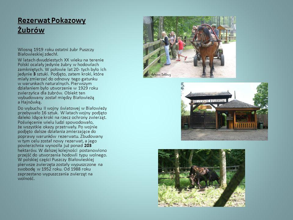 Rezerwat Pokazowy Żubrów Wiosną 1919 roku ostatni żubr Puszczy Białowieskiej zdechł. W latach dwudziestych XX wieku na terenie Polski ocalały jedynie