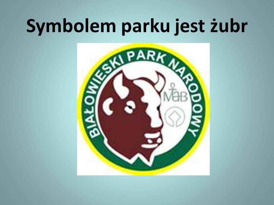 Symbolem parku jest żubr
