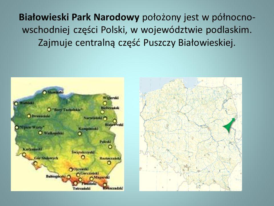Białowieski Park Narodowy położony jest w północno- wschodniej części Polski, w województwie podlaskim. Zajmuje centralną część Puszczy Białowieskiej.