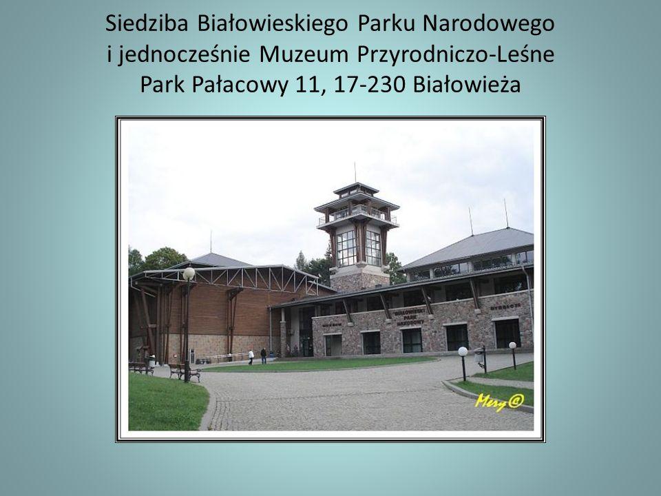 Puszcza Białowieska to ostatni naturalny las na Niżu Europejskim.