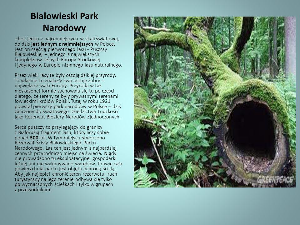 Białowieski Park Narodowy choć jeden z najcenniejszych w skali światowej, do dziś jest jednym z najmniejszych w Polsce. Jest on częścią pierwotnego la