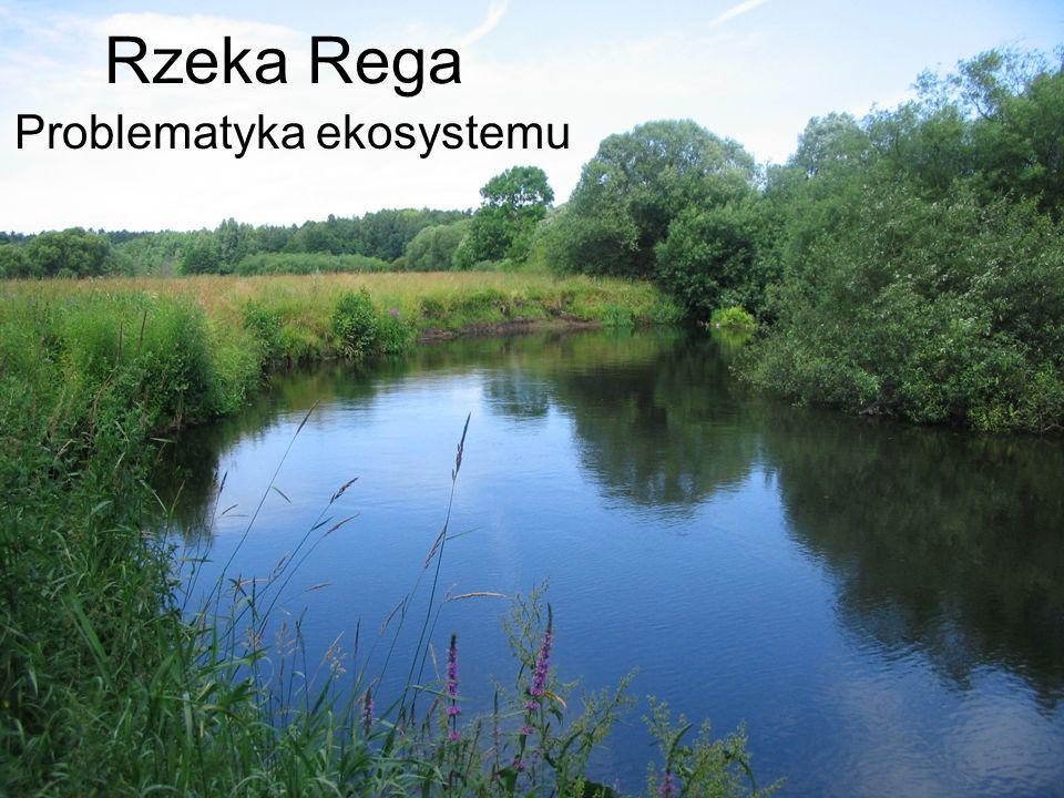 Rzeka Rega Problematyka ekosystemu