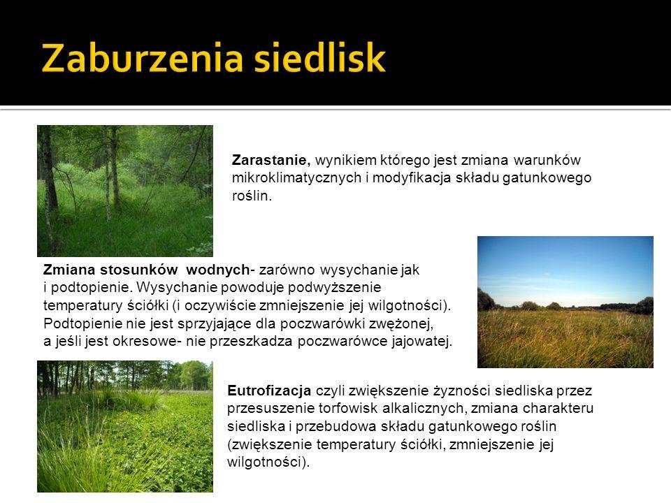 Zarastanie, wynikiem którego jest zmiana warunków mikroklimatycznych i modyfikacja składu gatunkowego roślin. Zmiana stosunków wodnych- zarówno wysych