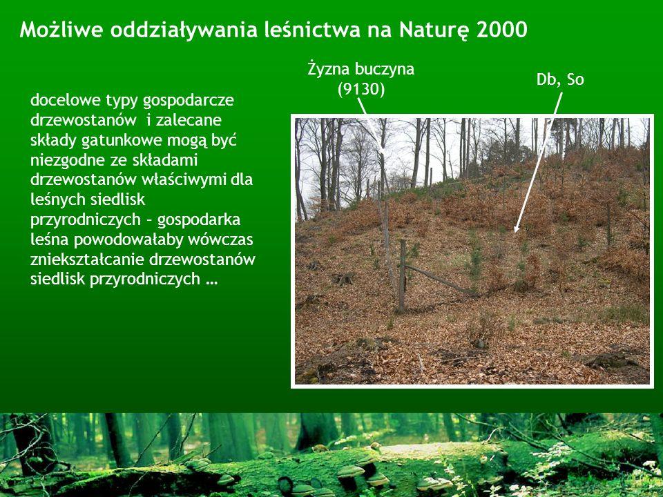 Możliwe oddziaływania leśnictwa na Naturę 2000 Db, So Żyzna buczyna (9130) docelowe typy gospodarcze drzewostanów i zalecane składy gatunkowe mogą być