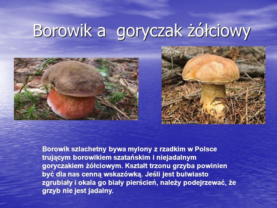 Borowik a goryczak żółciowy Borowik a goryczak żółciowy Borowik szlachetny bywa mylony z rzadkim w Polsce trującym borowikiem szatańskim i niejadalnym goryczakiem żółciowym.