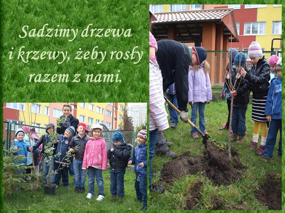 Sadzimy drzewa i krzewy, żeby rosły razem z nami.