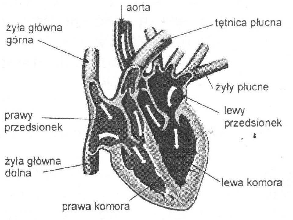Choroby układu krążenia Choroba wieńcowa i zawał serca Zwężenie naczyń wieńcowych, zwykle na skutek odkładania się w nich złogów cholesterolu, jest przyczyną choroby wieńcowej.